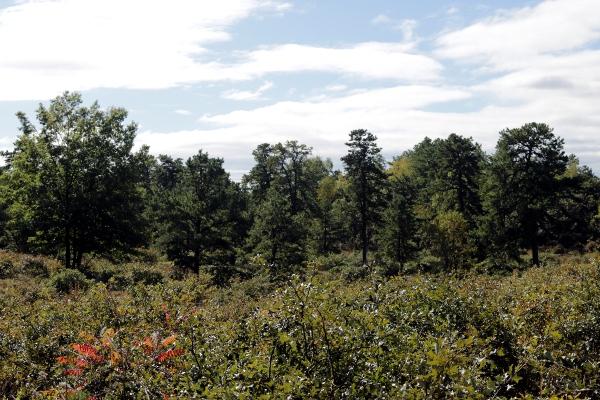 Pine Bush Preserve Nature Center